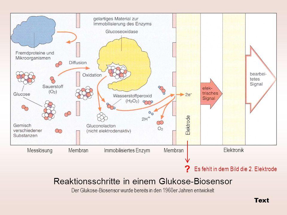 Reaktionsschritte in einem Glukose-Biosensor