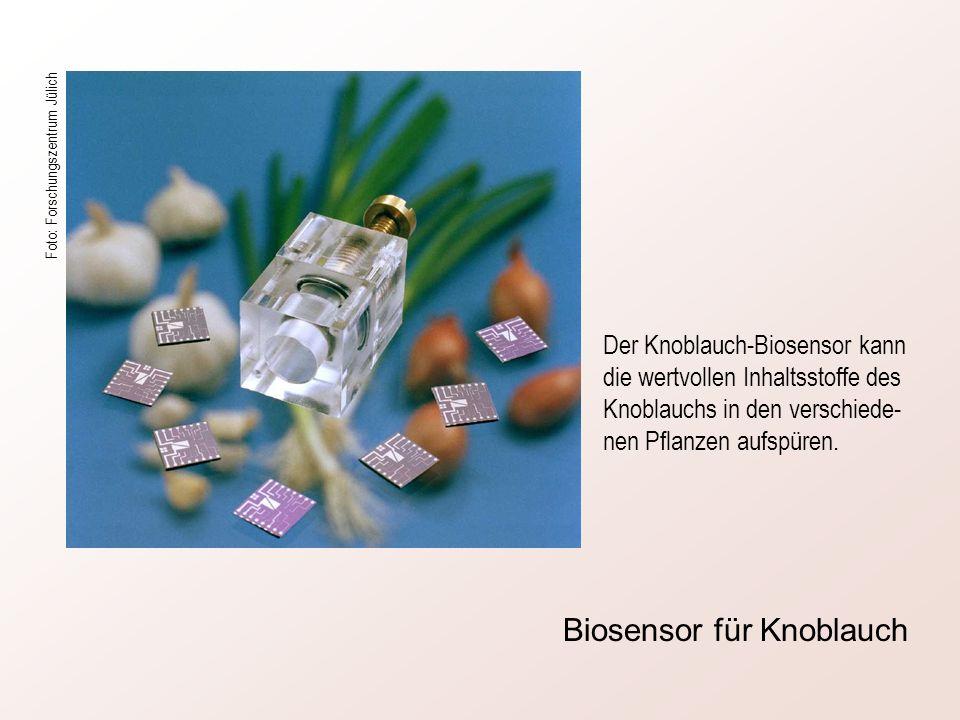 Biosensor für Knoblauch