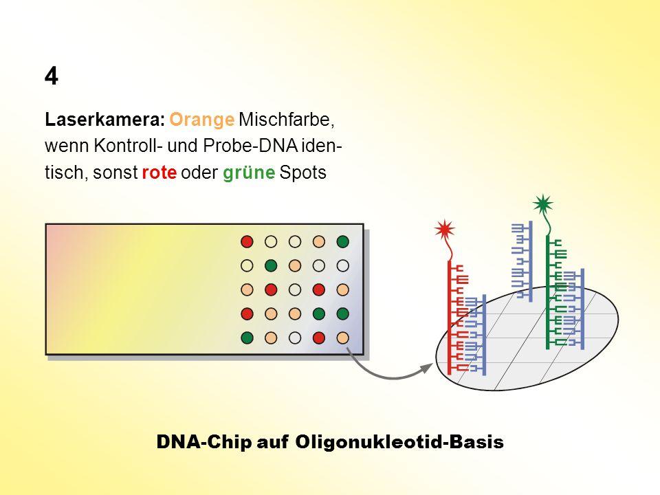 4 Laserkamera: Orange Mischfarbe, wenn Kontroll- und Probe-DNA iden-