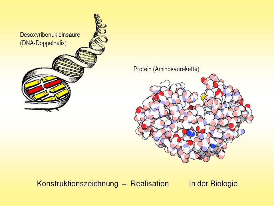 Konstruktionszeichnung – Realisation In der Biologie