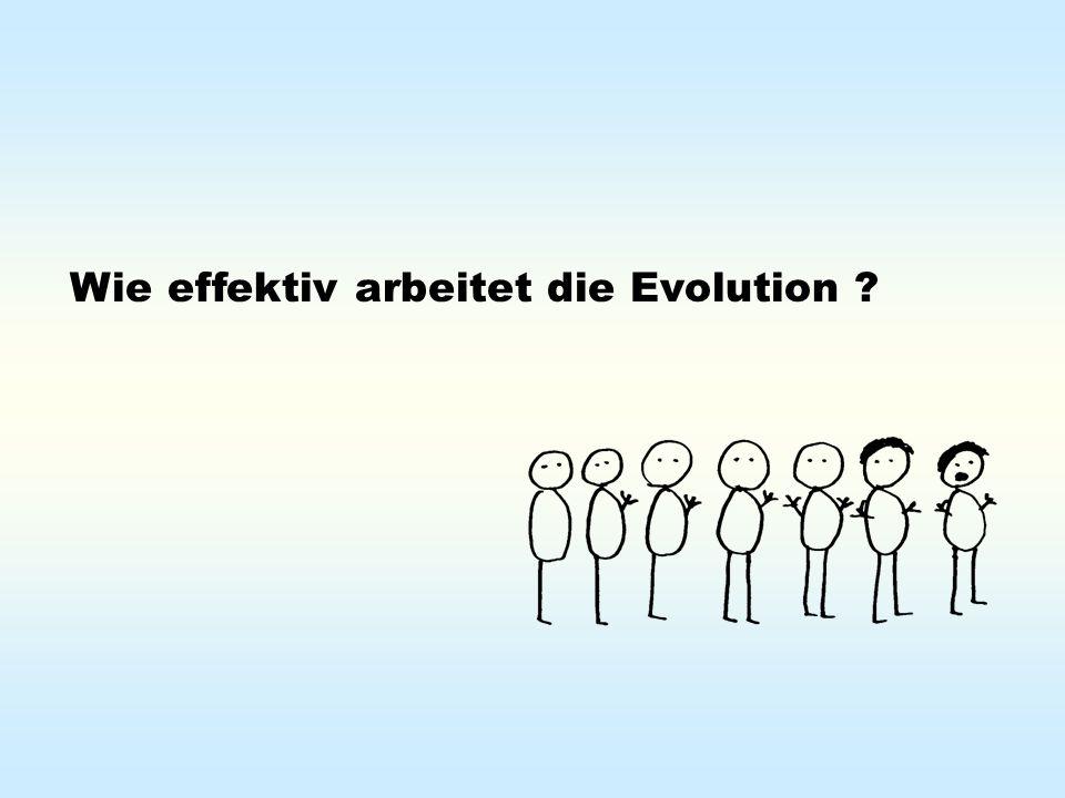 Wie effektiv arbeitet die Evolution