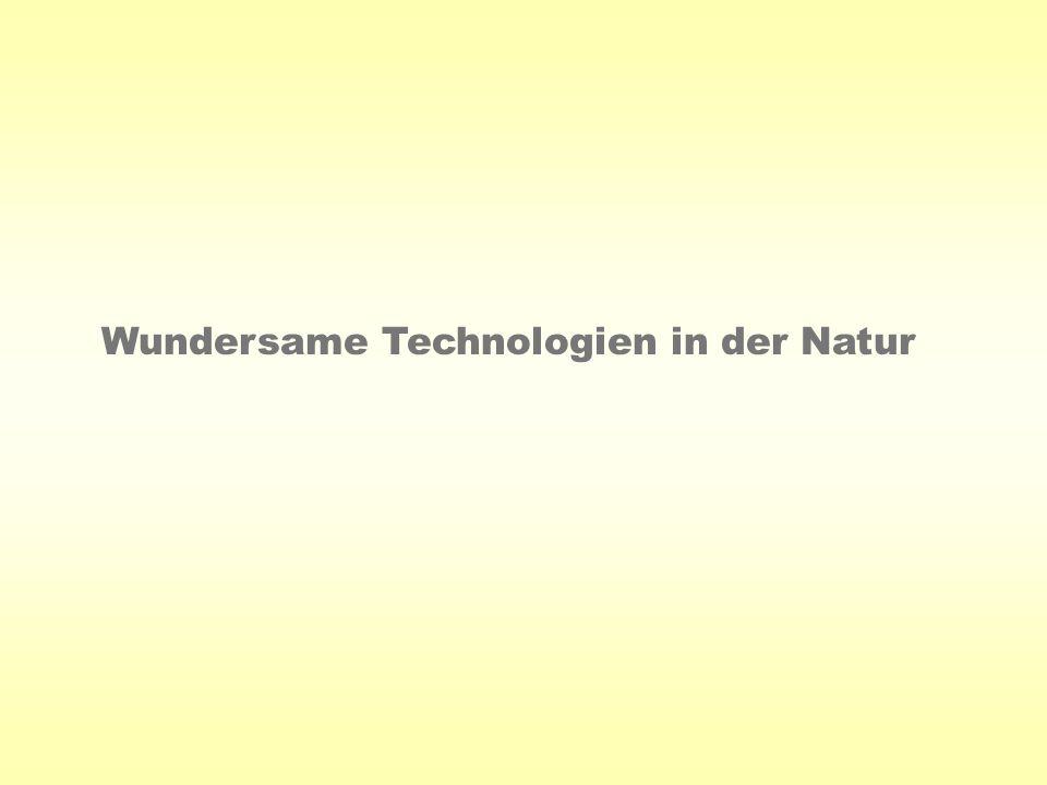 Wundersame Technologien in der Natur