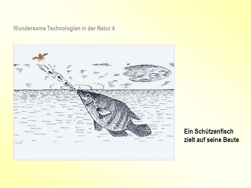 Ein Schützenfisch zielt auf seine Beute