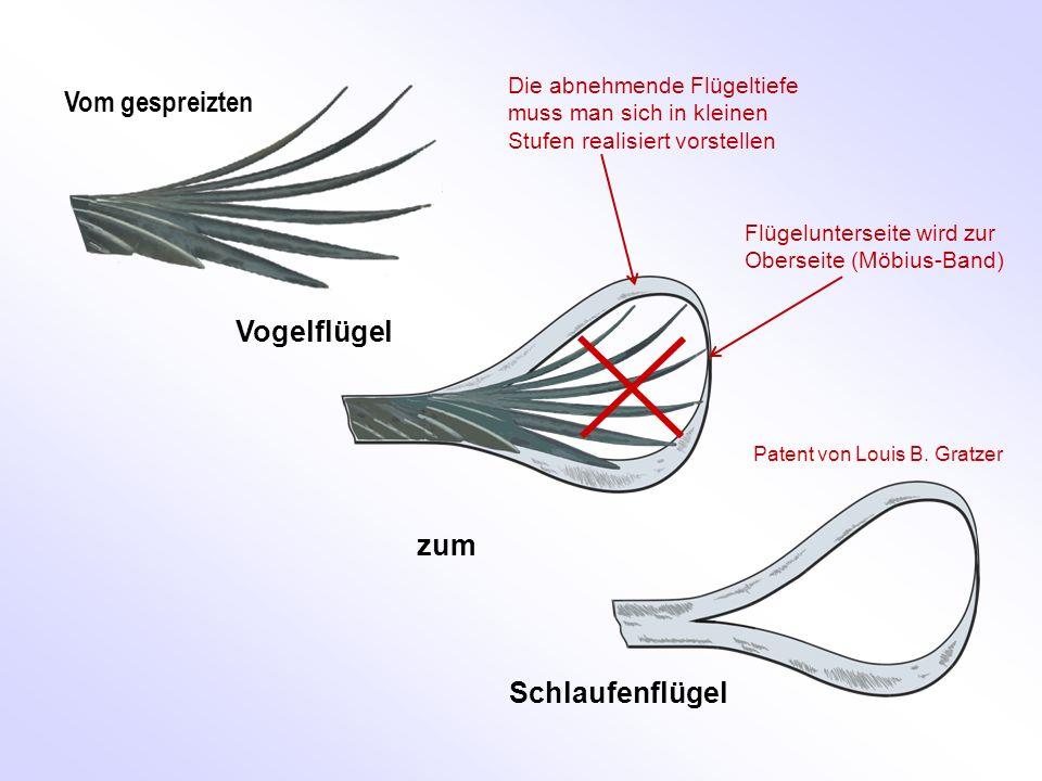 Vom gespreizten Vogelflügel zum Schlaufenflügel