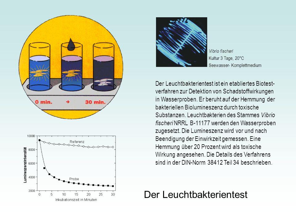 Der Leuchtbakterientest