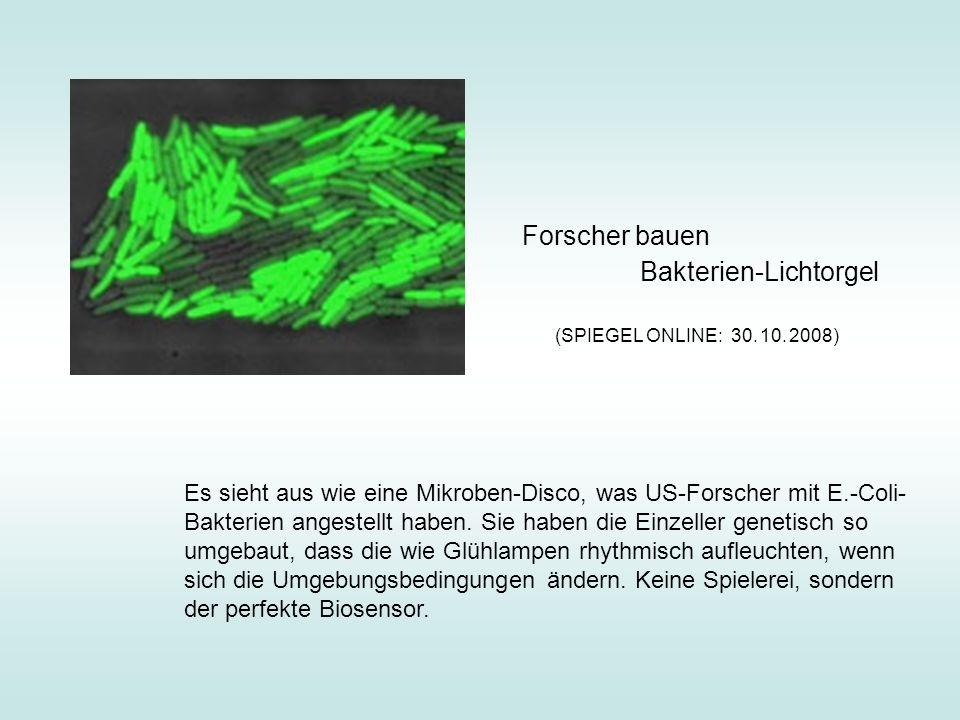Bakterien-Lichtorgel