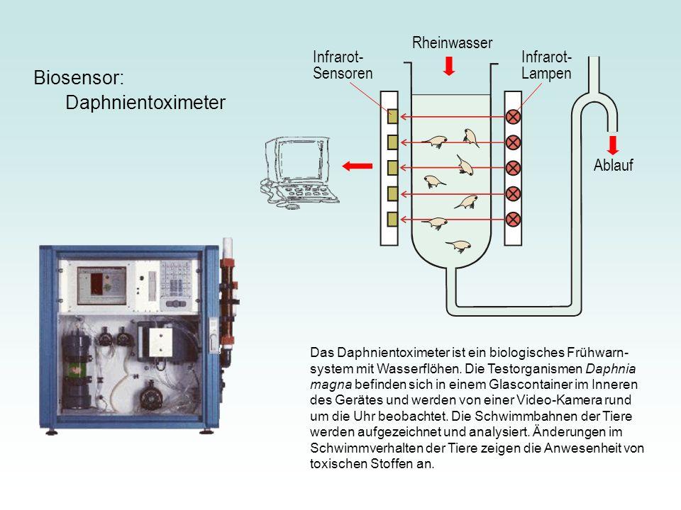 Biosensor: Daphnientoximeter Rheinwasser Infrarot-Sensoren