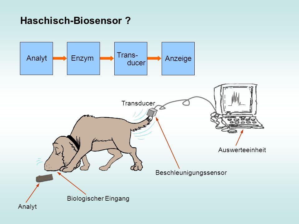 Haschisch-Biosensor Analyt Enzym Trans- ducer Anzeige Transducer