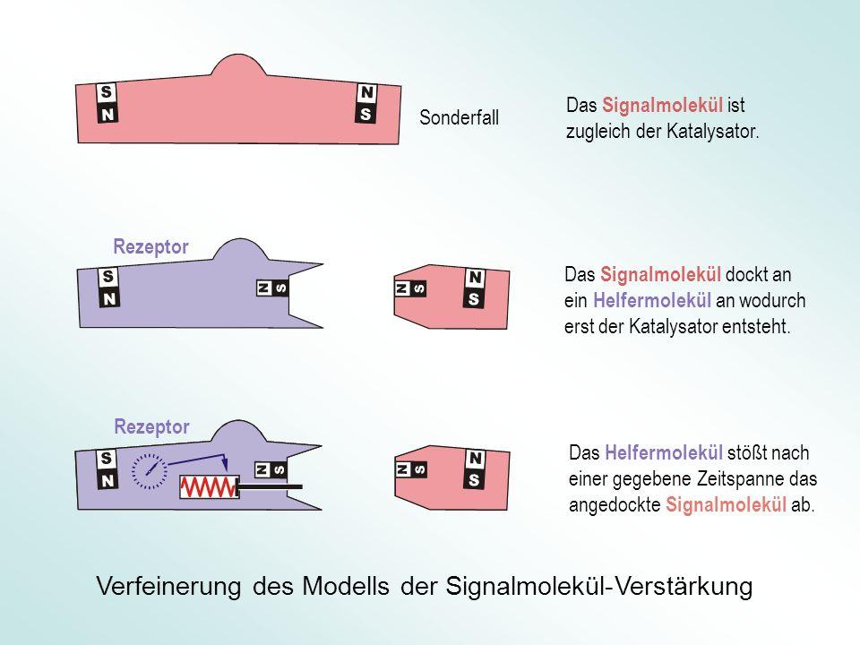 Verfeinerung des Modells der Signalmolekül-Verstärkung