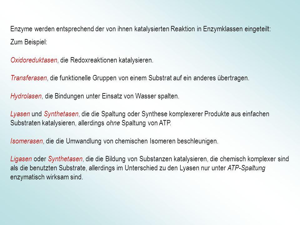 Enzyme werden entsprechend der von ihnen katalysierten Reaktion in Enzymklassen eingeteilt: