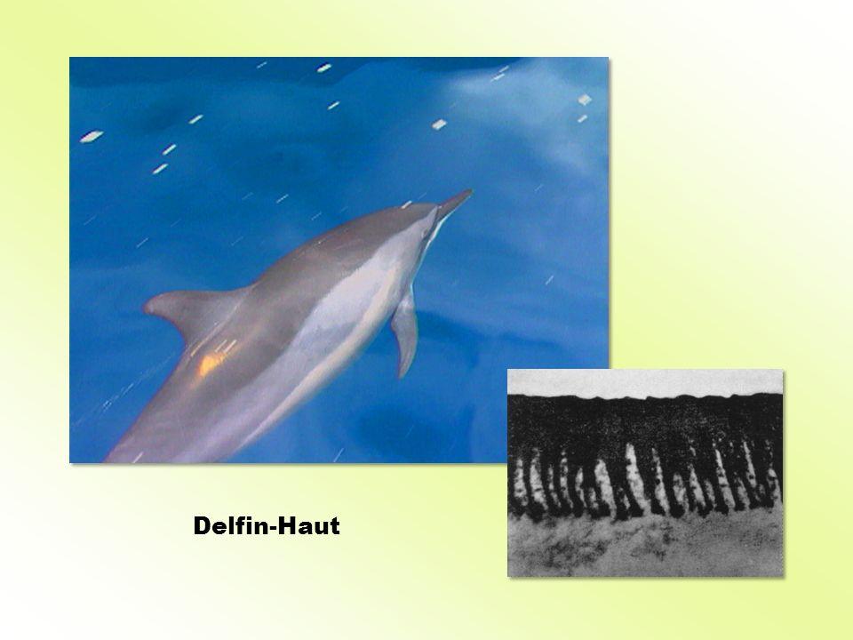 Delfin-Haut
