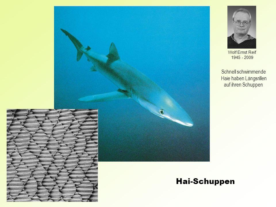 Haie haben Längsrillen