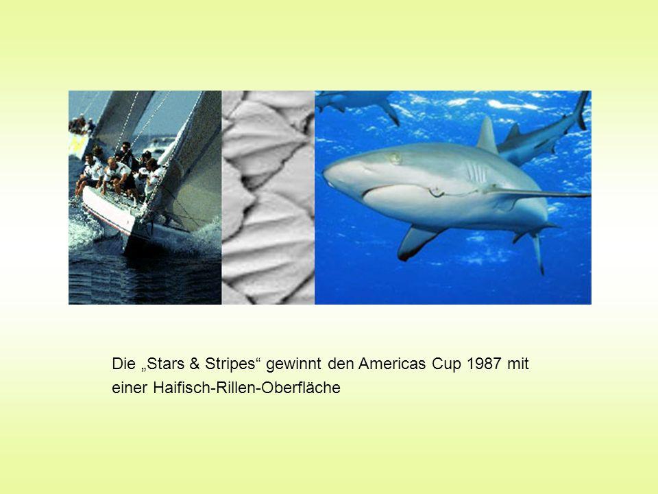 """Die """"Stars & Stripes gewinnt den Americas Cup 1987 mit einer Haifisch-Rillen-Oberfläche"""