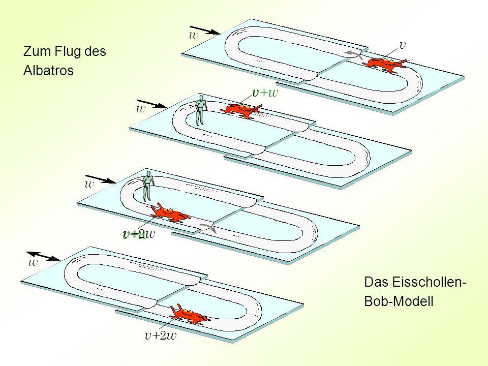 v Zum Flug des Albatros v v+ w v+ w v+2w Das Eisschollen-Bob-Modell v+2w