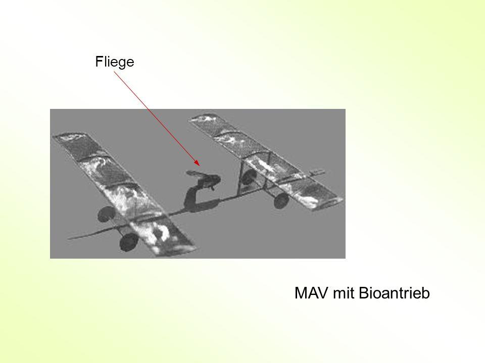 Fliege MAV mit Bioantrieb