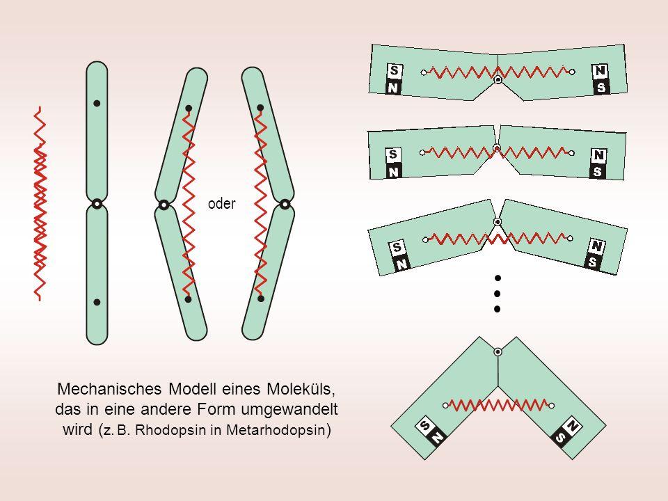 oder Mechanisches Modell eines Moleküls, das in eine andere Form umgewandelt wird (z.