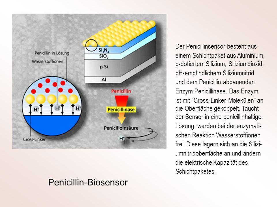Penicillin-Biosensor