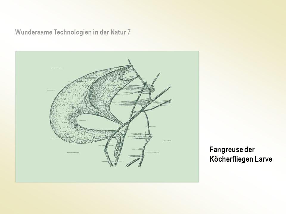 Fangreuse der Köcherfliegen Larve