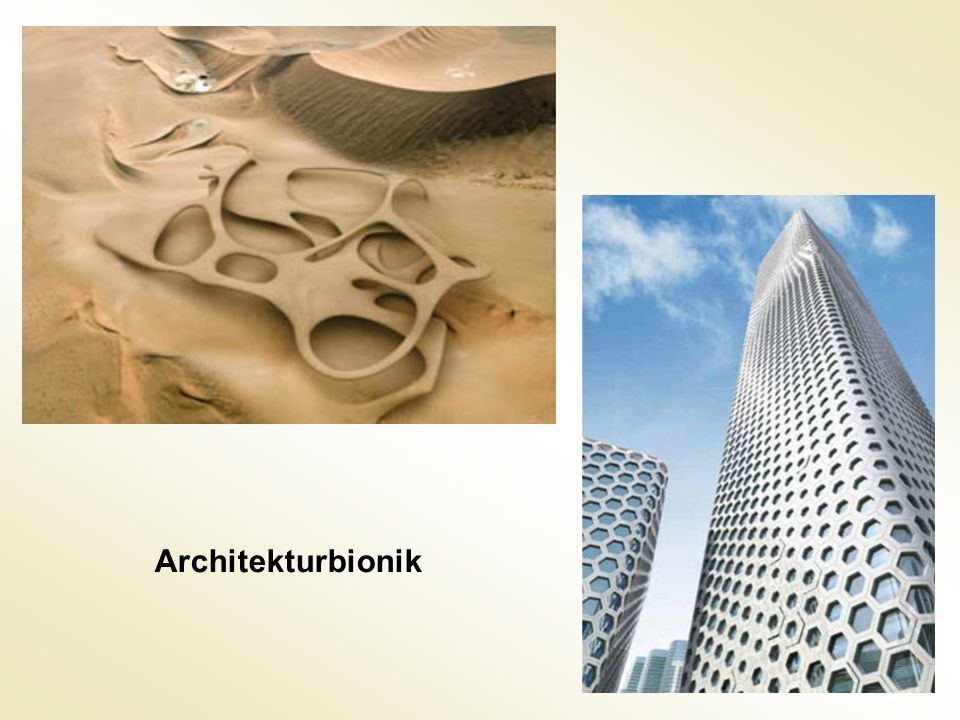 Architekturbionik