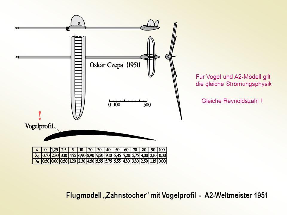 """! Flugmodell """"Zahnstocher mit Vogelprofil - A2-Weltmeister 1951"""