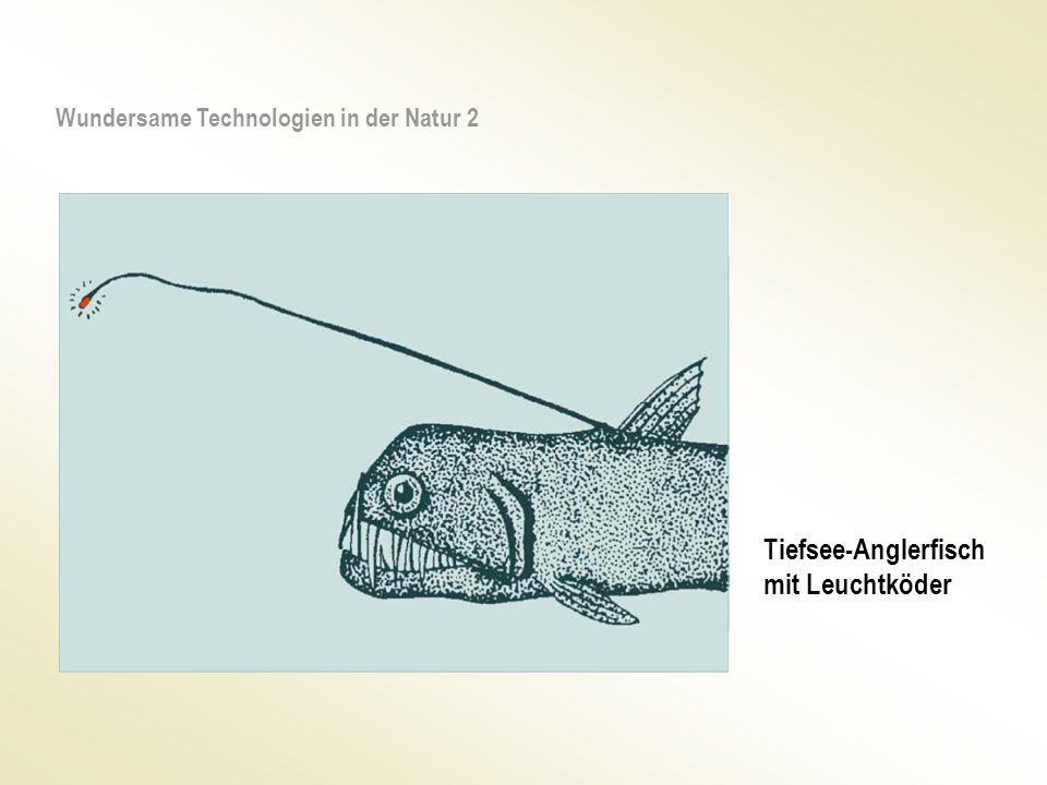 Tiefsee-Anglerfisch mit Leuchtköder