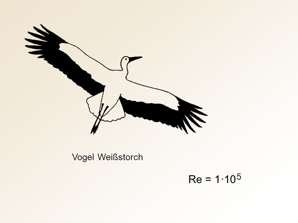 Vogel Weißstorch Re = 1 ·10 5