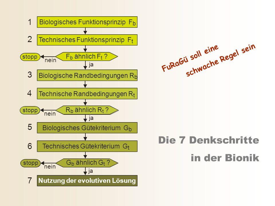 Die 7 Denkschritte in der Bionik