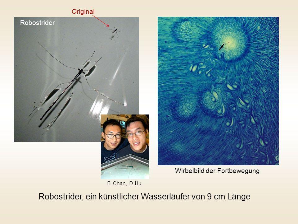 Robostrider, ein künstlicher Wasserläufer von 9 cm Länge