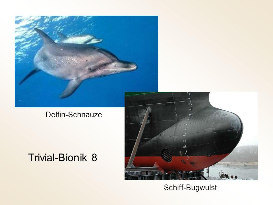 Delfin-Schnauze Trivial-Bionik 8 Schiff-Bugwulst