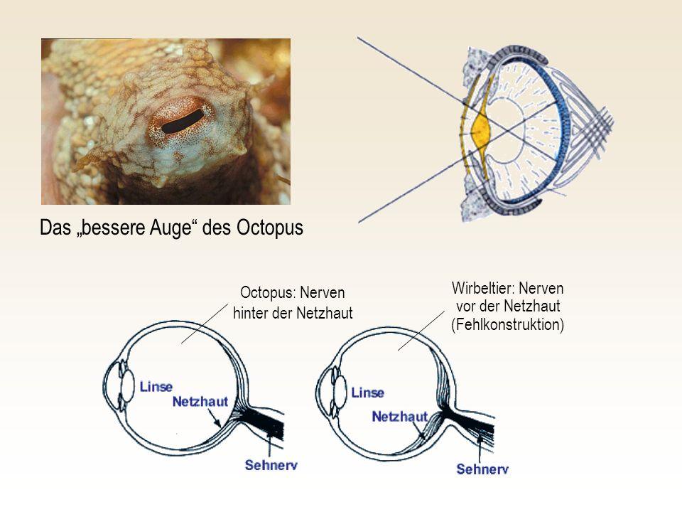 """Das """"bessere Auge des Octopus"""