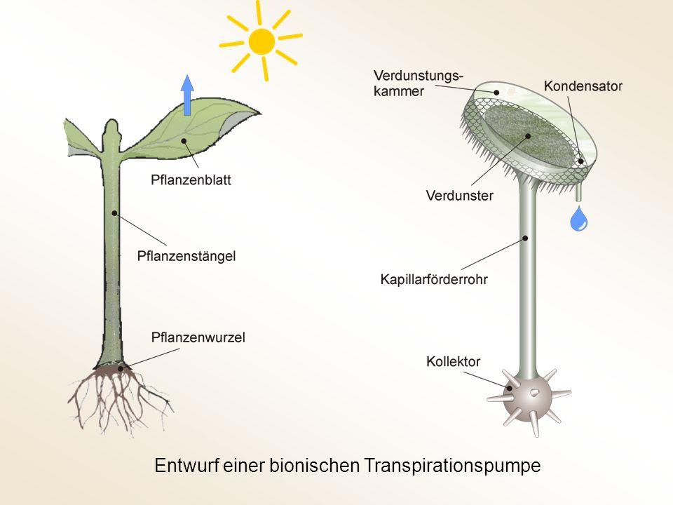 Entwurf einer bionischen Transpirationspumpe