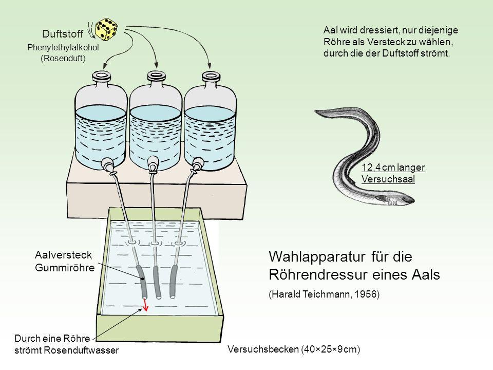 Wahlapparatur für die Röhrendressur eines Aals