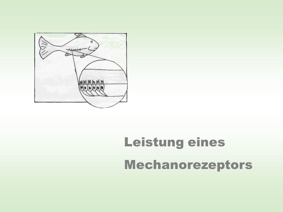 Leistung eines Mechanorezeptors