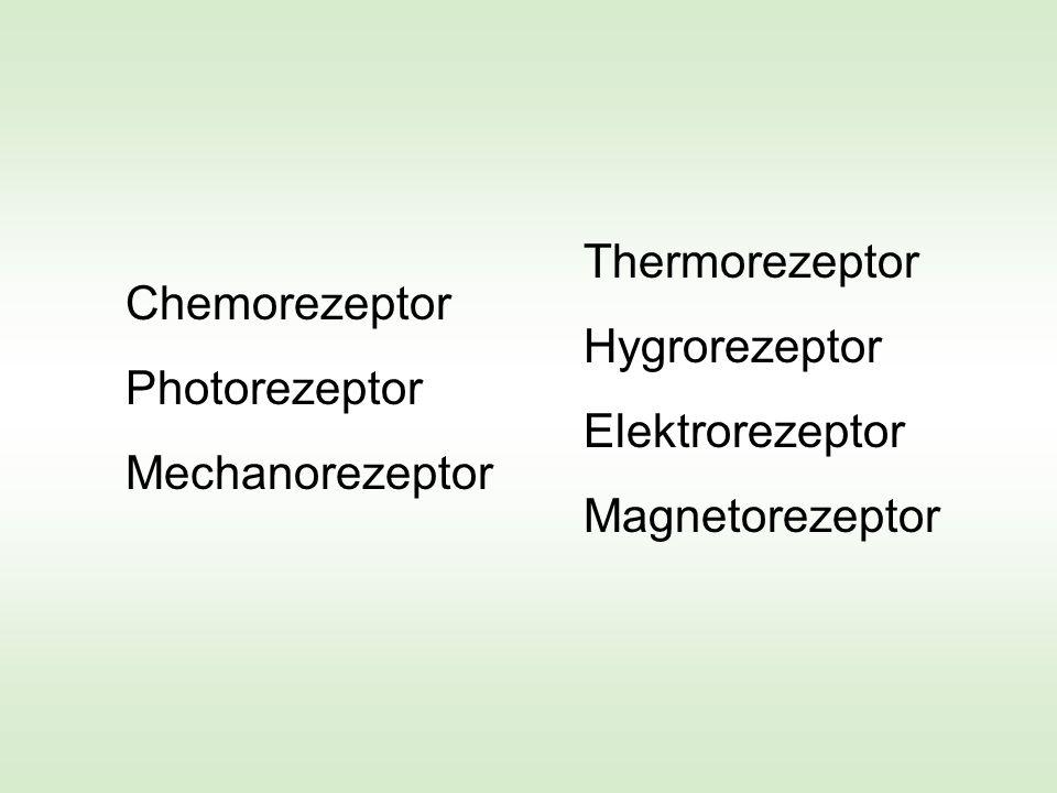 Thermorezeptor Hygrorezeptor. Elektrorezeptor. Magnetorezeptor. Thermorezeptor. Hygrorezeptor. Elektrorezeptor.