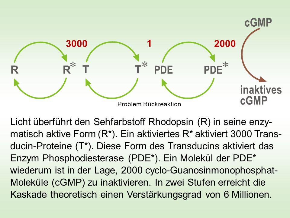cGMP inaktives cGMP R R T T PDE PDE 3000 1 2000