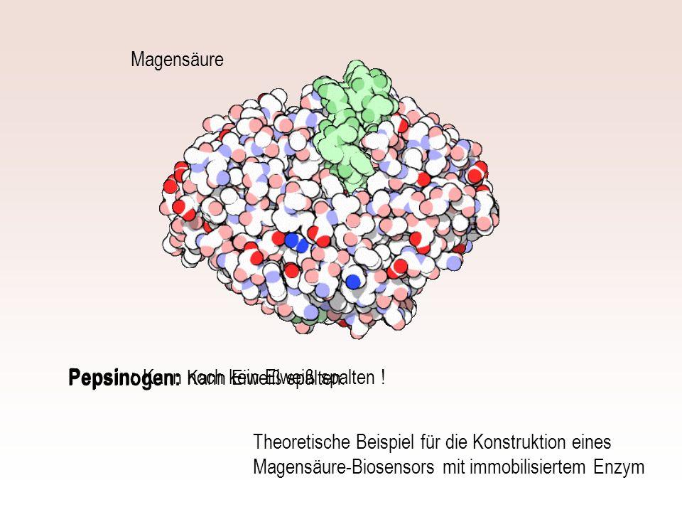 Pepsin: Pepsinogen: Magensäure Kann noch kein Eiweiß spalten !