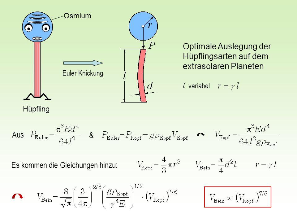 Optimale Auslegung der Hüpflingsarten auf dem extrasolaren Planeten