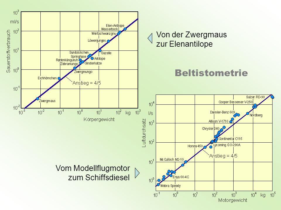 Beltistometrie Von der Zwergmaus zur Elenantilope