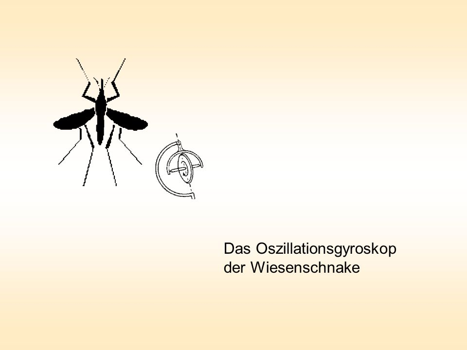Das Oszillationsgyroskop der Wiesenschnake