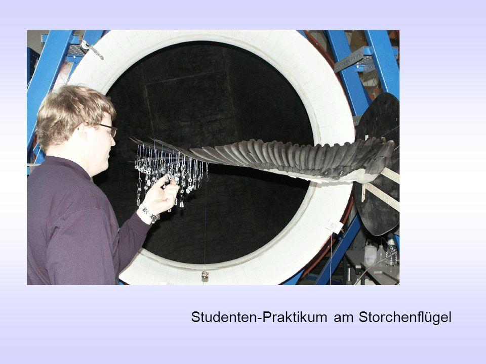 Studenten-Praktikum am Storchenflügel