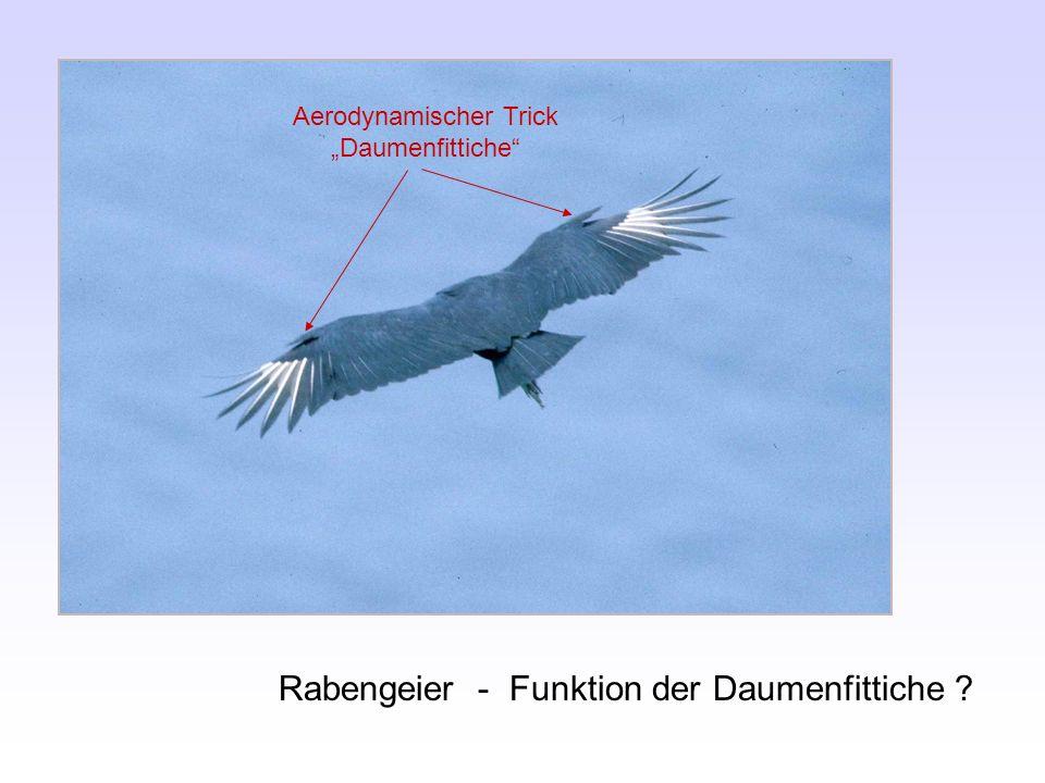"""Aerodynamischer Trick """"Daumenfittiche"""
