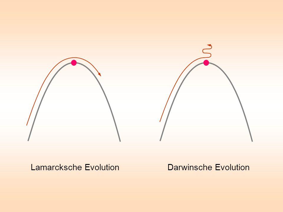 Lamarcksche Evolution