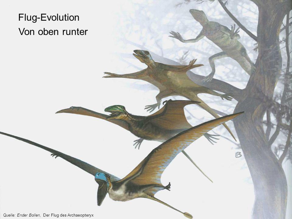 Flug-Evolution Von oben runter