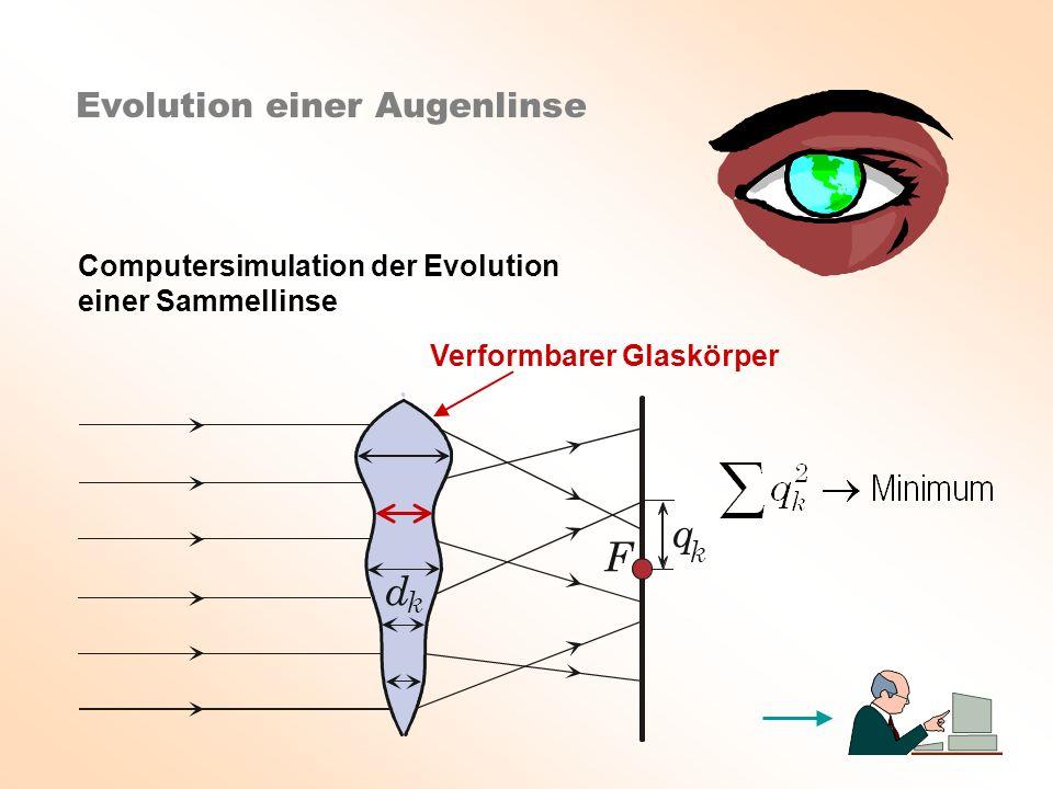 q F d Evolution einer Augenlinse