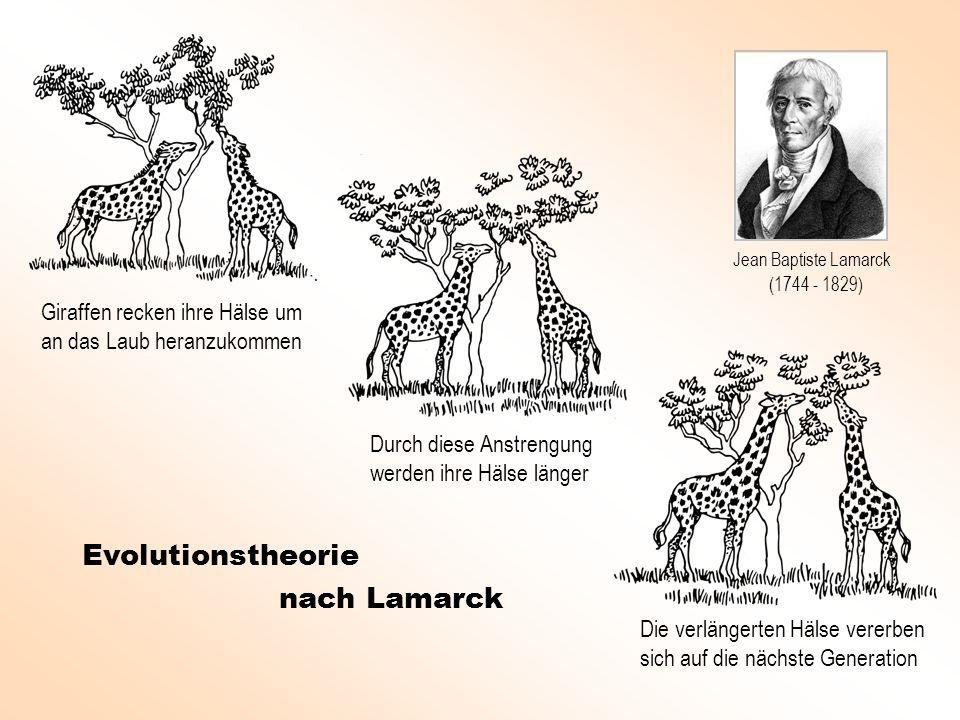 Evolutionstheorie nach Lamarck