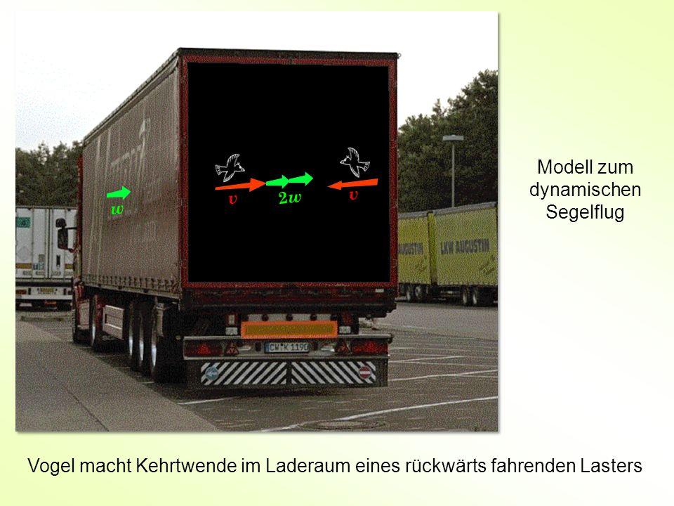 Modell zum dynamischen Segelflug