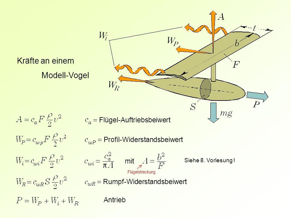 Kräfte an einem Modell-Vogel = Flügel-Auftriebsbeiwert
