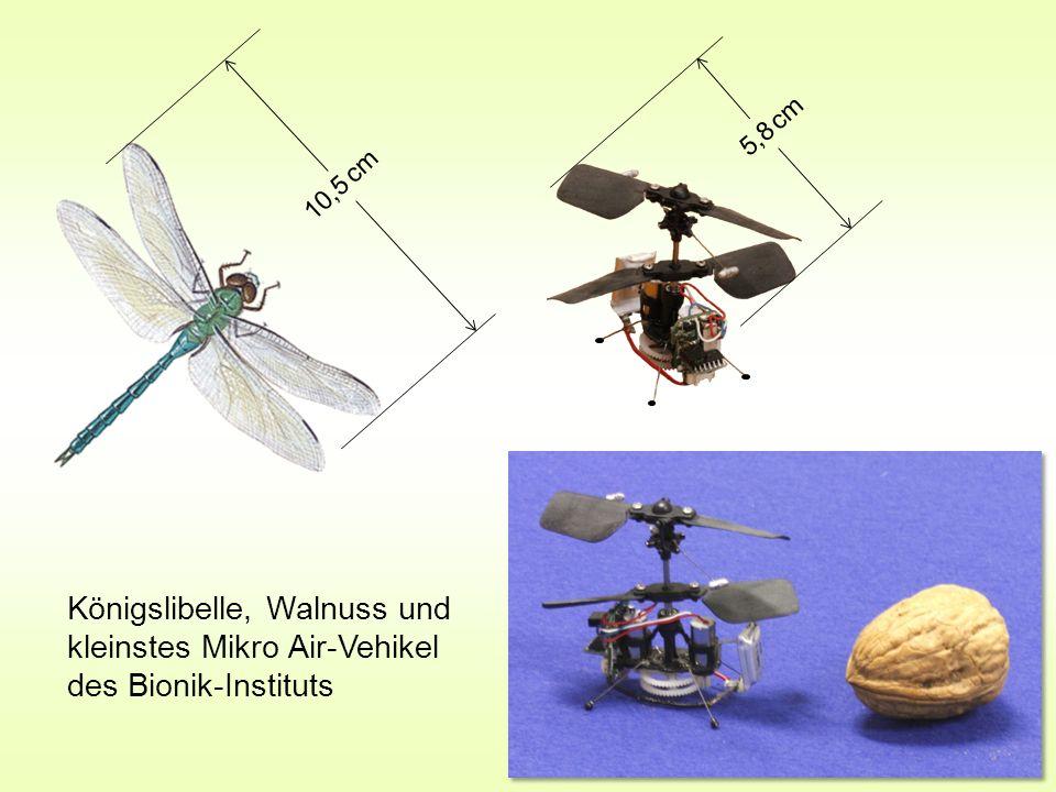 5,8 cm 10,5 cm Königslibelle, Walnuss und kleinstes Mikro Air-Vehikel des Bionik-Instituts