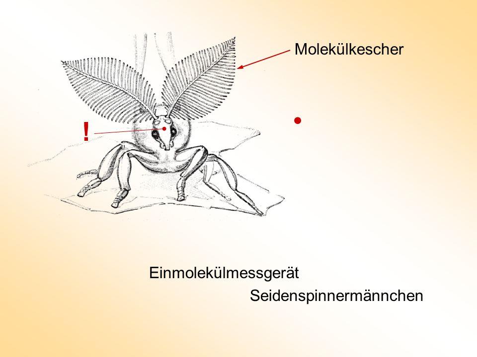 Molekülkescher ! Einmolekülmessgerät Seidenspinnermännchen