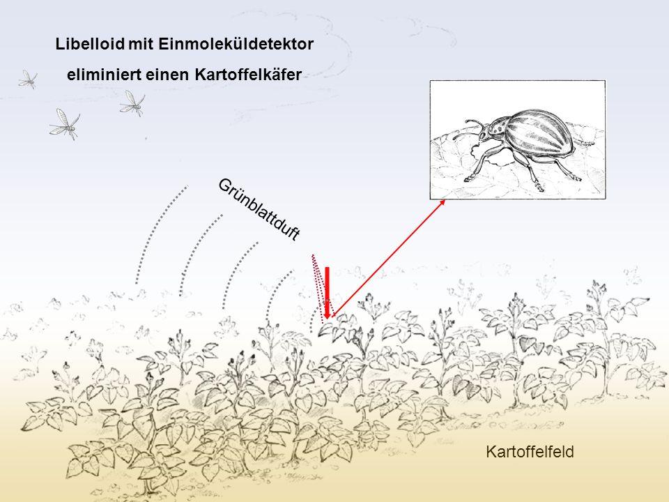 Libelloid mit Einmoleküldetektor eliminiert einen Kartoffelkäfer